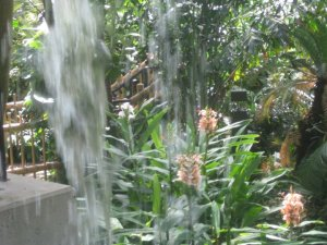 A waterfall at the Fort Wayne Botanical Conservatory