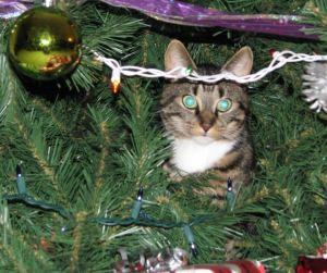 2012 Christmas Cat