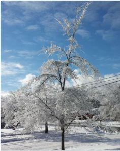Iced Tree, 2013